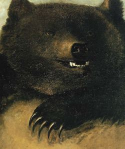 Grizzly bear 19th century artwork