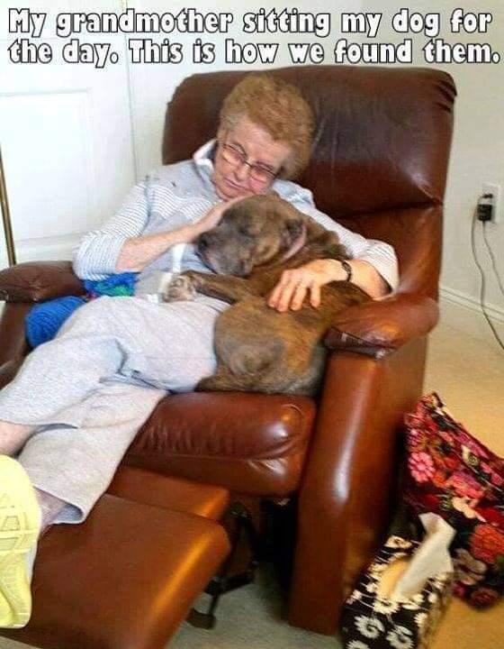 Memes Grandma and dog