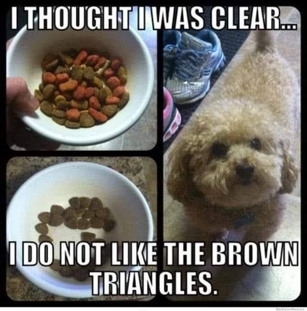 Memes Picky dog