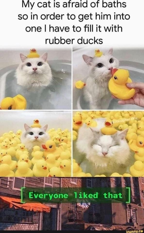 Memes Rubber ducks in bathtub with cat