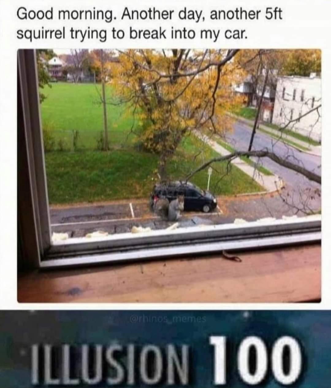Memes Giant squirrel