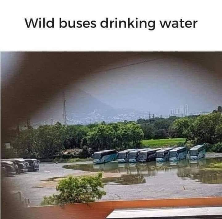 Memes wild buses drinking water