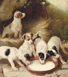 Jack Russell puppies drinking milk