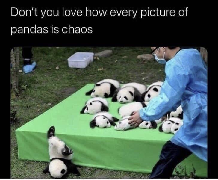 Memes Panda Cub