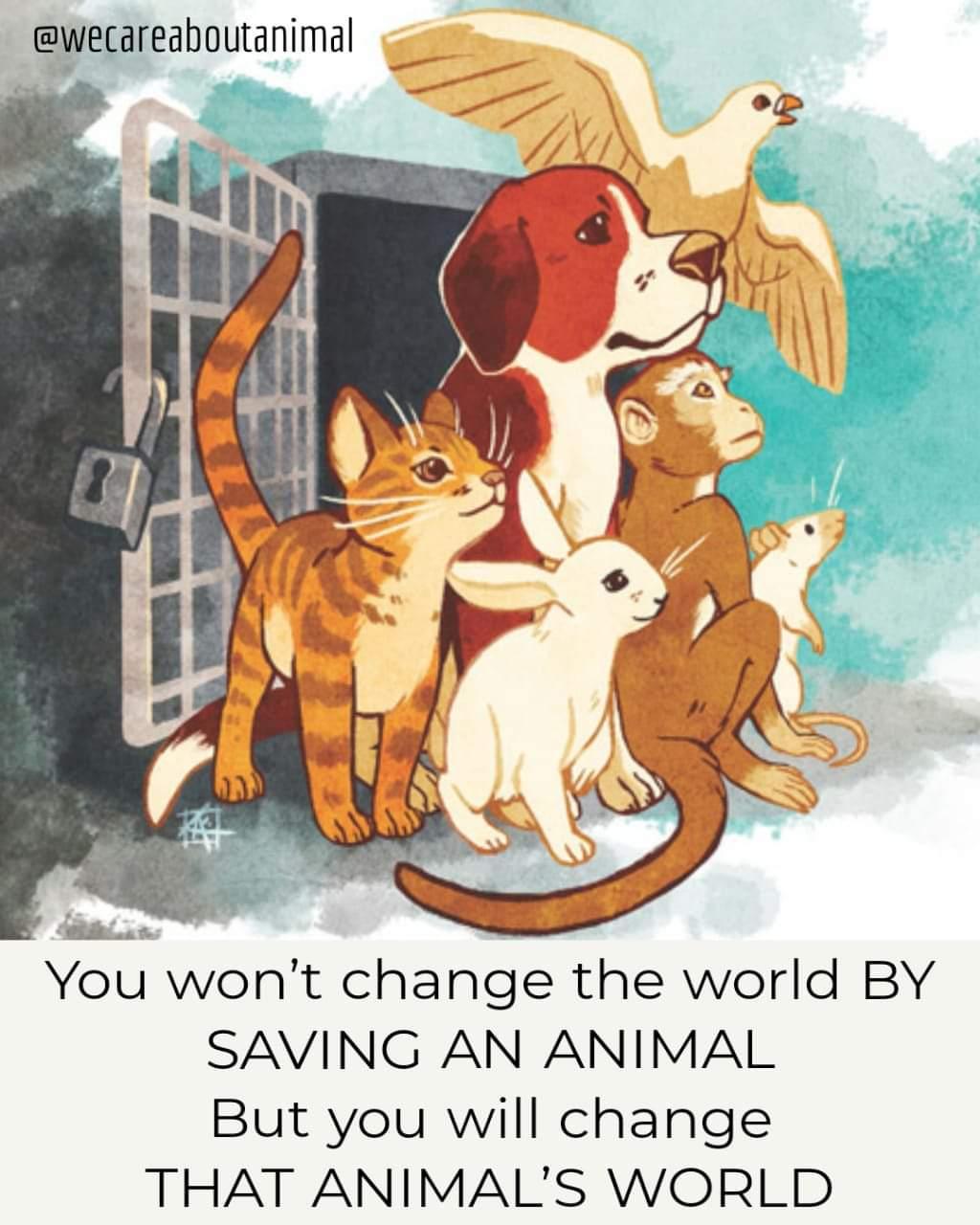 Memes Saving animals