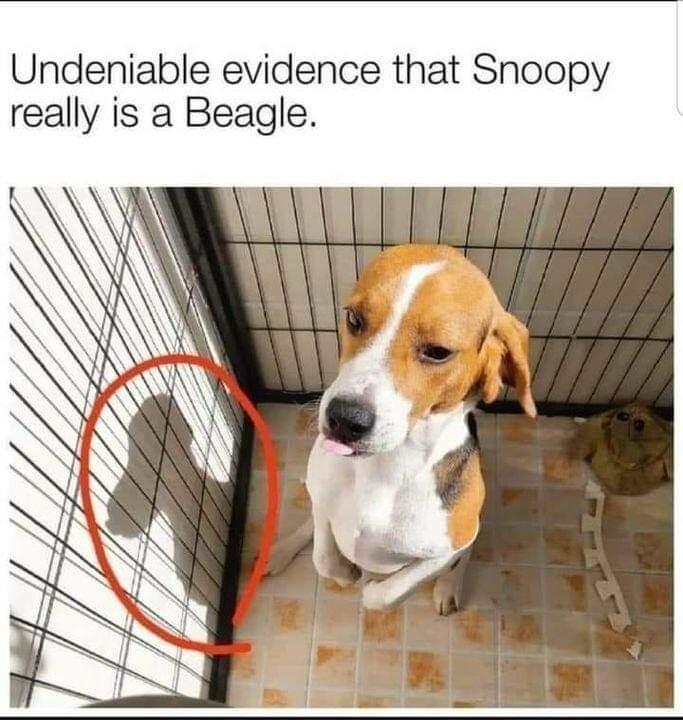 Memes Snoopy is a beagle