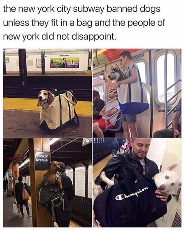 Memes Dogs on the subway