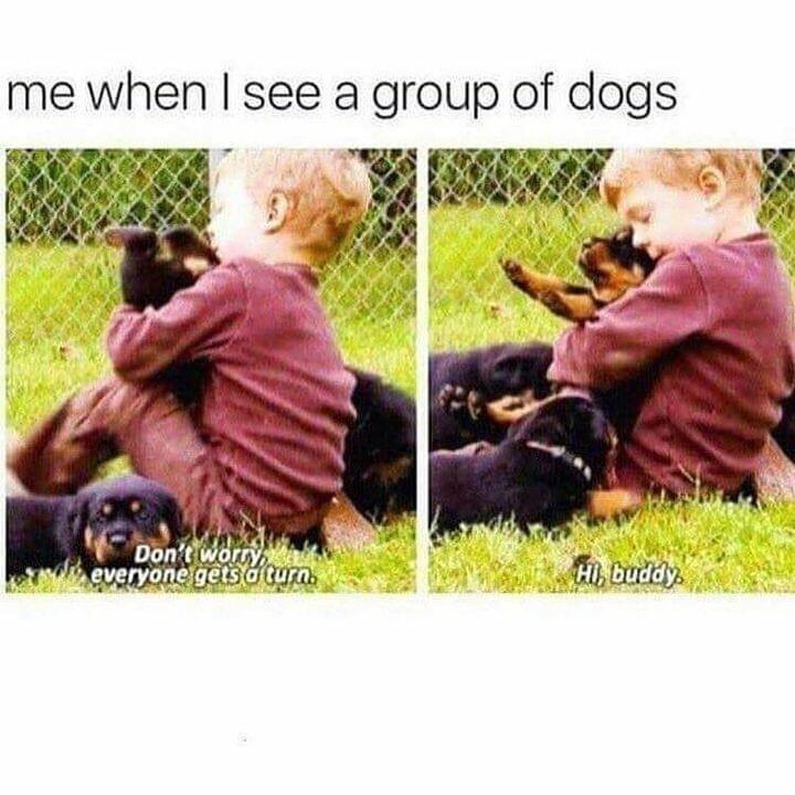 memes Hugging puppies