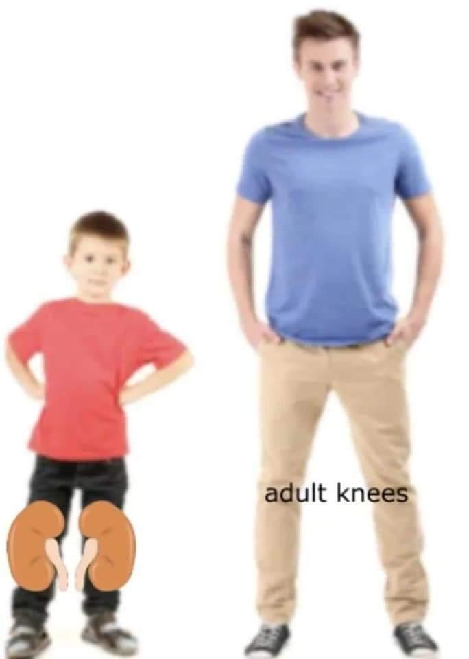 Memes Adult knees versus kidneys