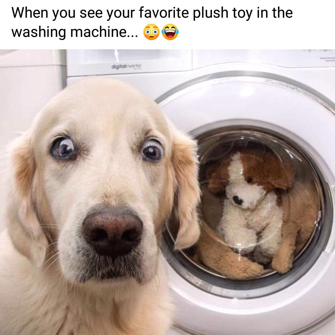 Memes Washing stuff animals in the washing machine