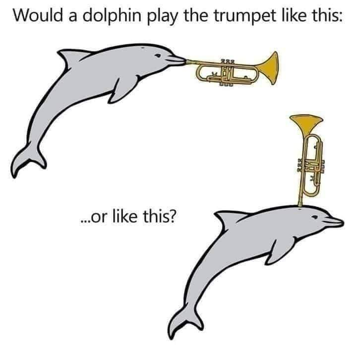 Memes Dolphin playing the trumpet