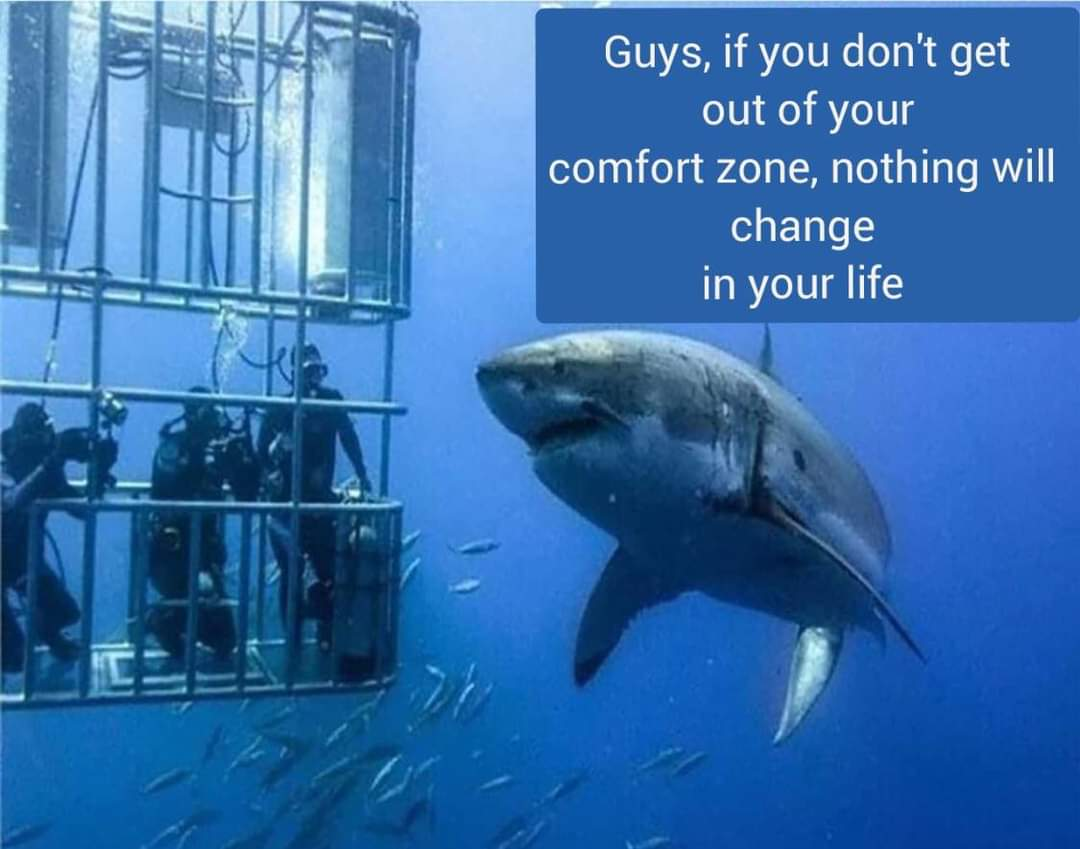 Memes Swimmers and shark cage