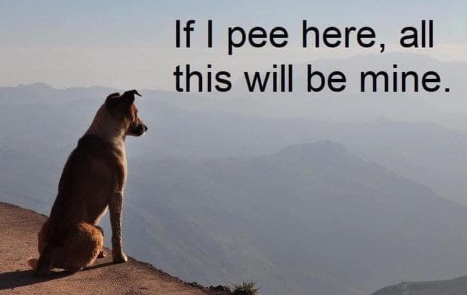 Memes Dogs looking over the mountains