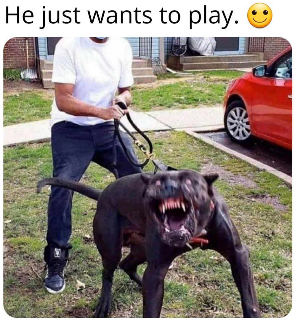 Memes Scary pitbull