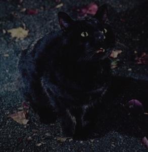 Black cat Hocus Pocus
