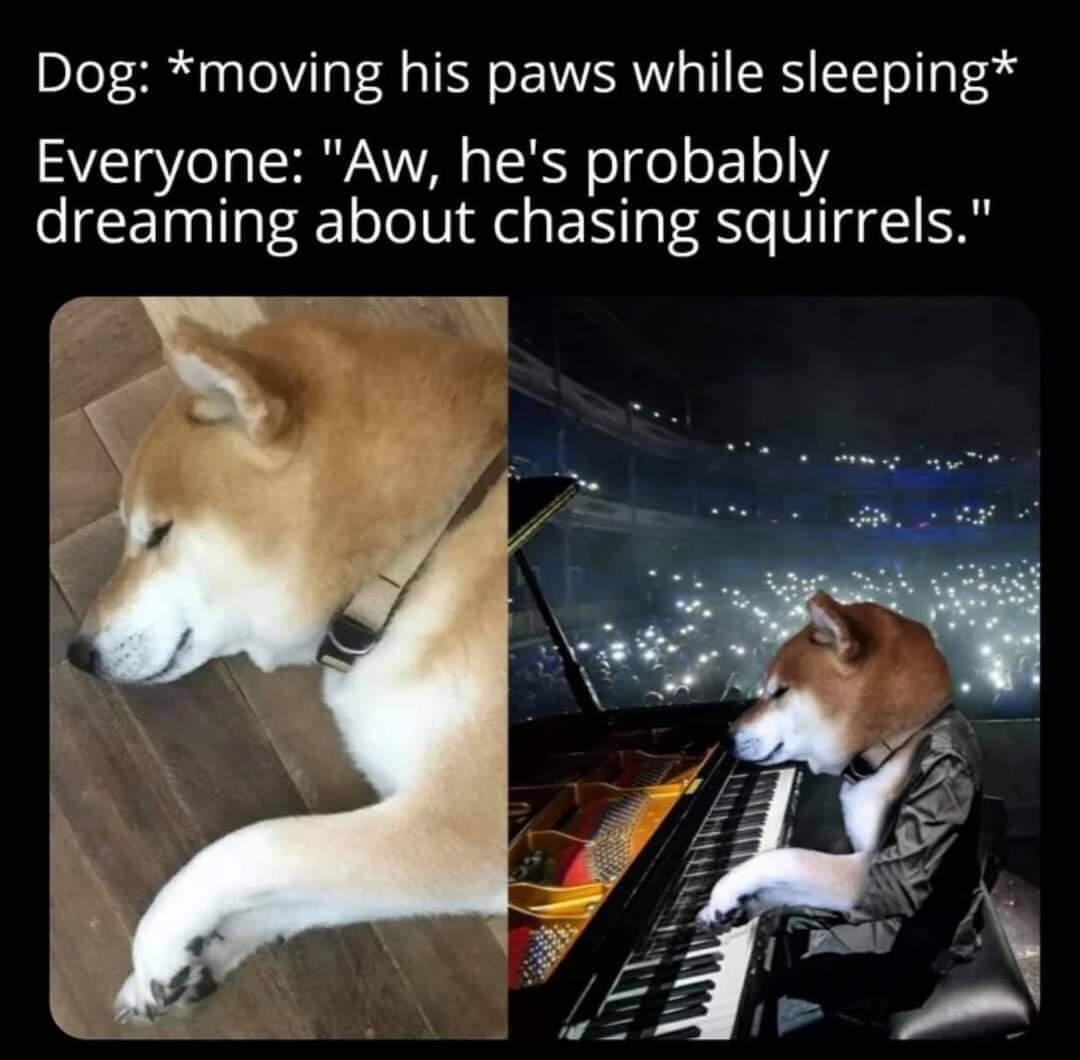 Memes What dogs dream about