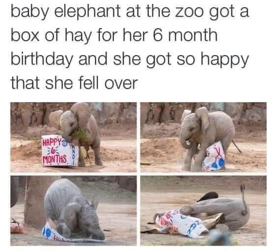 Memes baby elephant birthday present