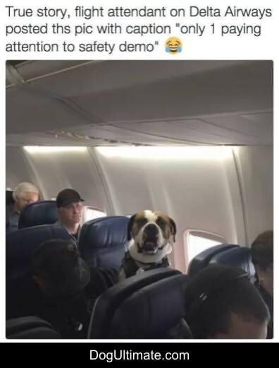 Memes dog on the airplane