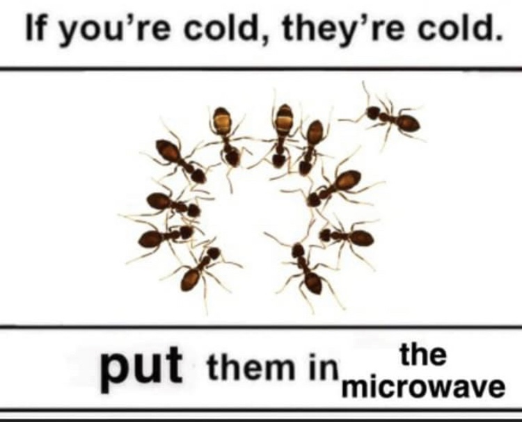 Memes ants are cold
