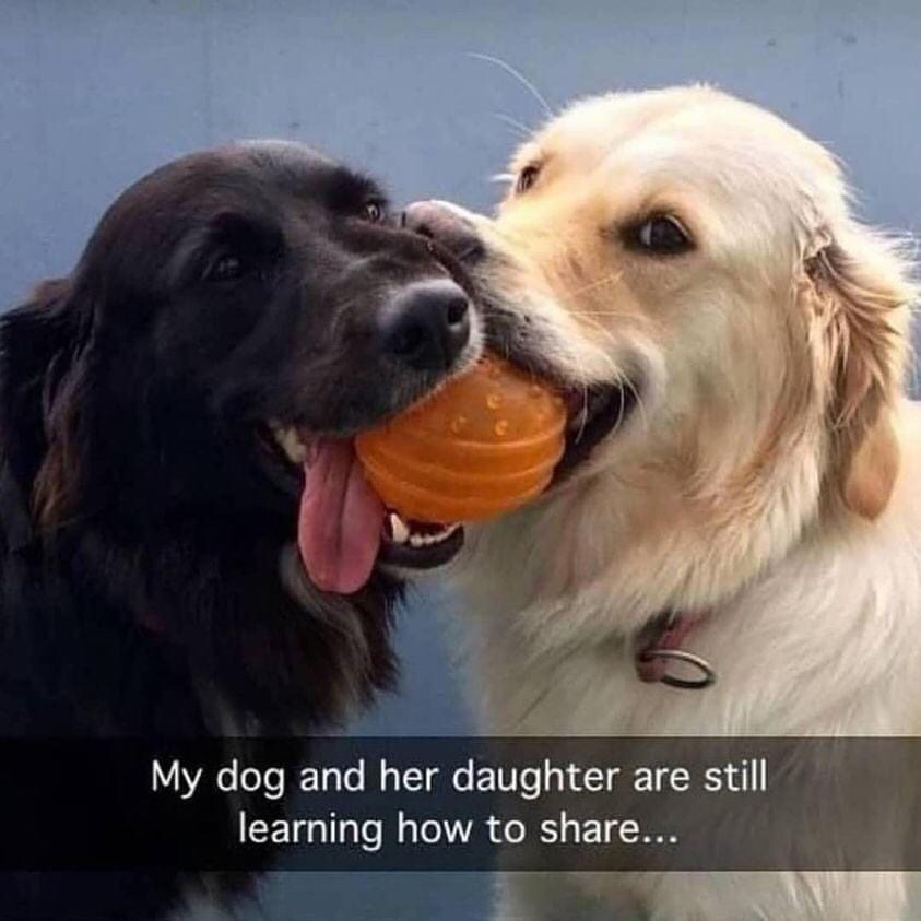 Memes dogs learning how to share