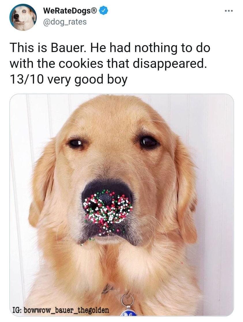 Memes dog eating cookies
