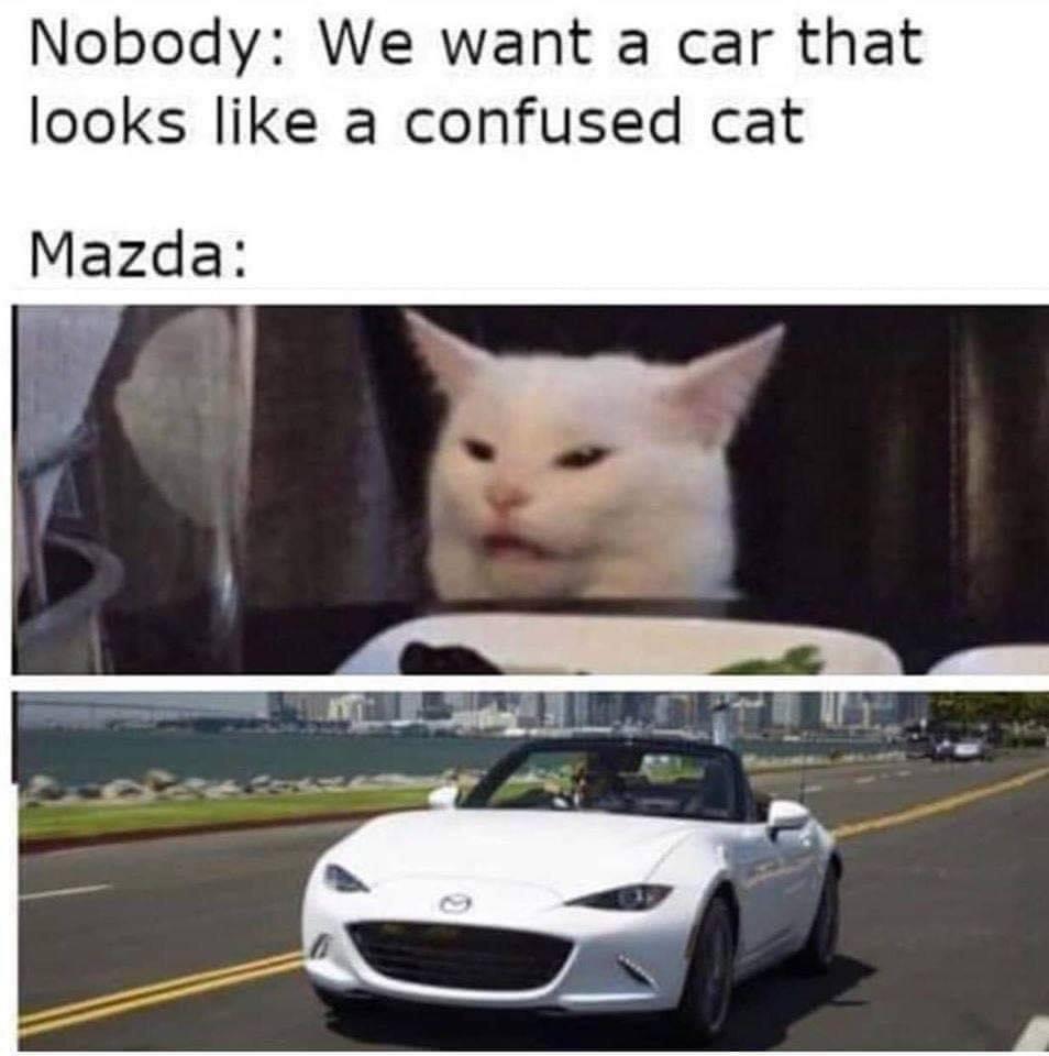 Memes confused cat car mazda