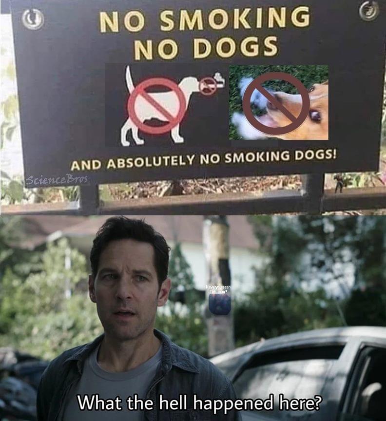 Memes no smoking no dogs sign