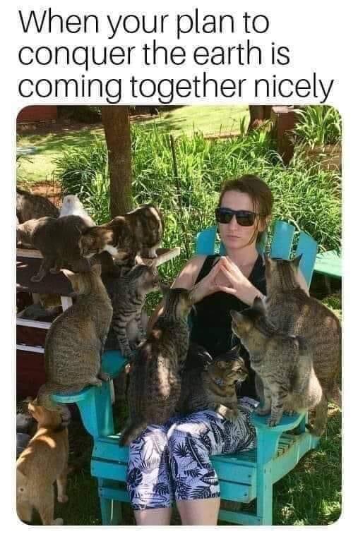 Memes crazy cat lady