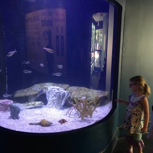 Little girl looking at fish Riverbanks zoo Columbia sc