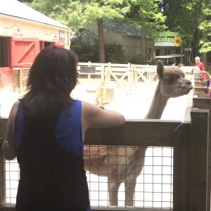 Feeding the alpaca Riverbanks zoo Columbia sc