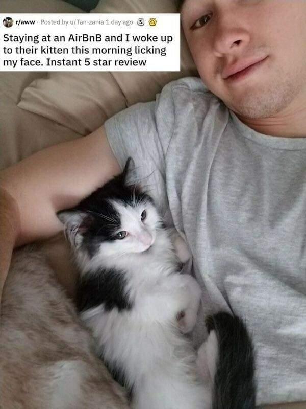 Memes friendly cat Airbnb