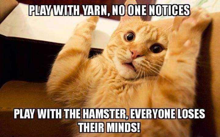 Memes cat playing with yarn
