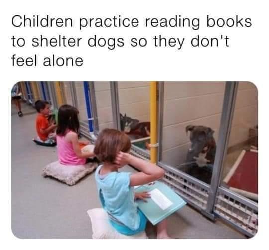 Memes children reading to shelter dogs