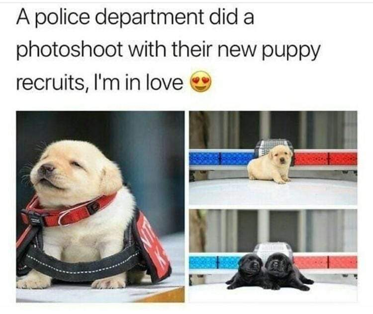Memes police puppies