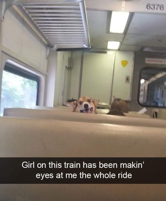 Memes cute dog on the train