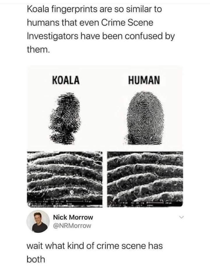 Memes koala fingerprints