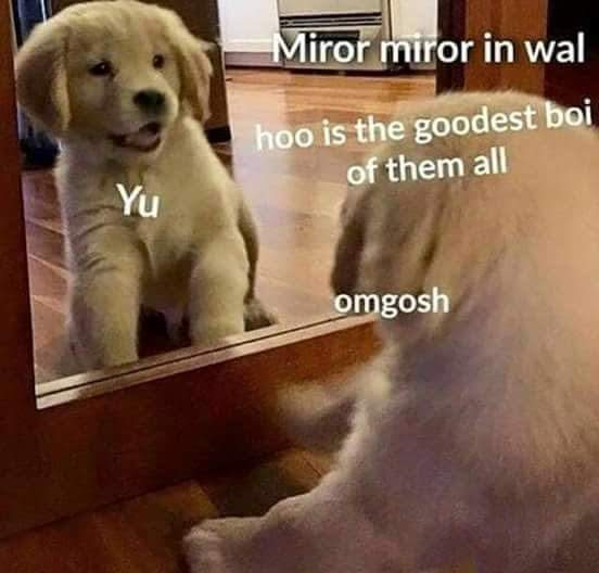Memes puppy asking who is the good boy to the mirror