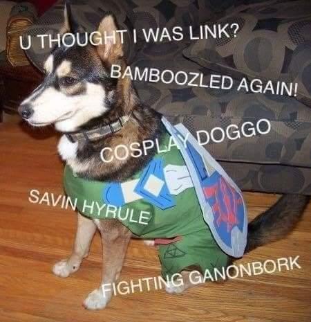 Memes legend of Zelda link dog cosplay