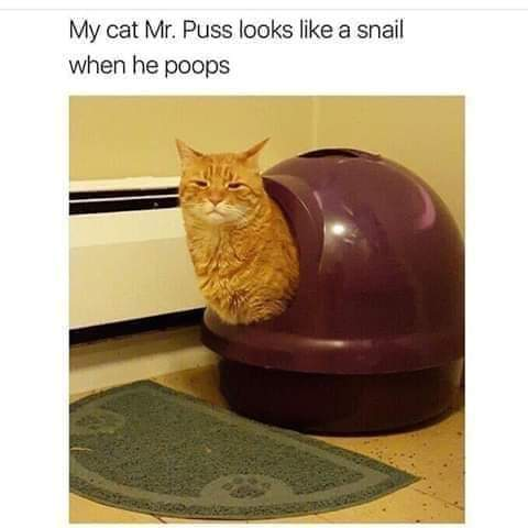 Memes cat that looks like a snail while pooping