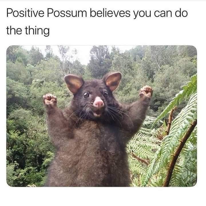 Memes positive possum