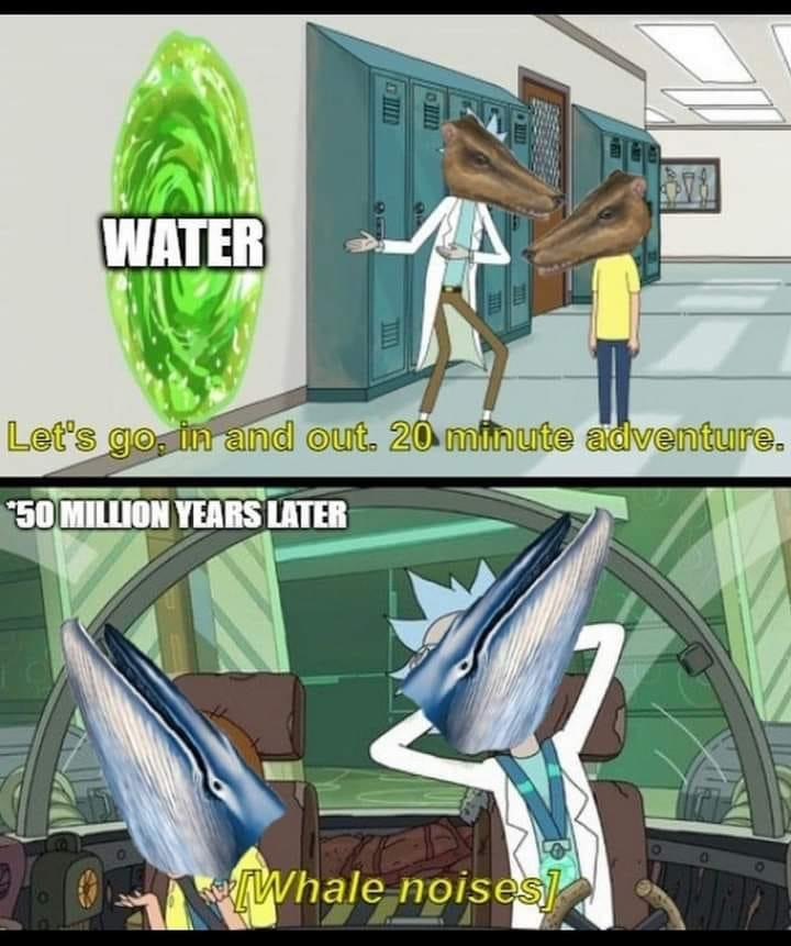 Memes whale evolution.