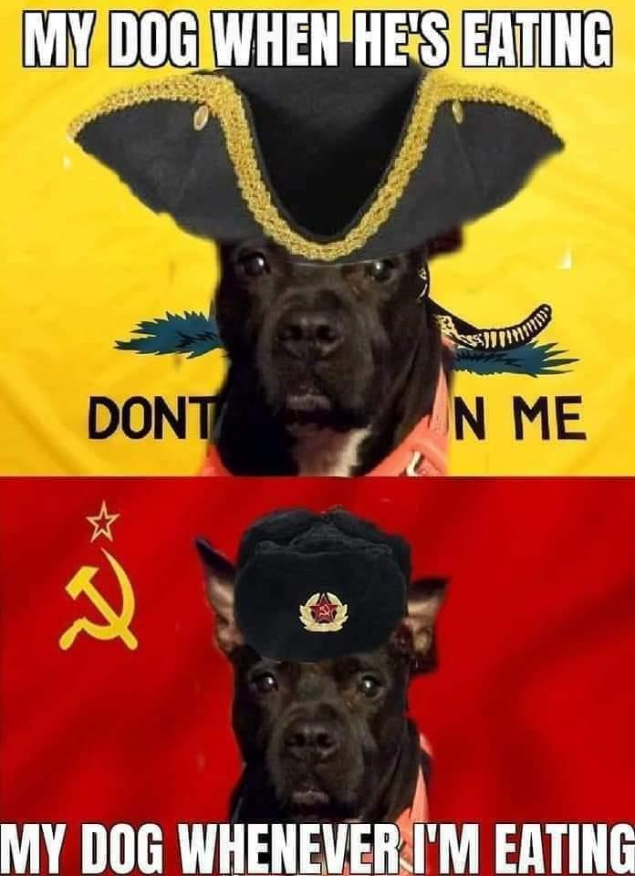 Memes communist dog