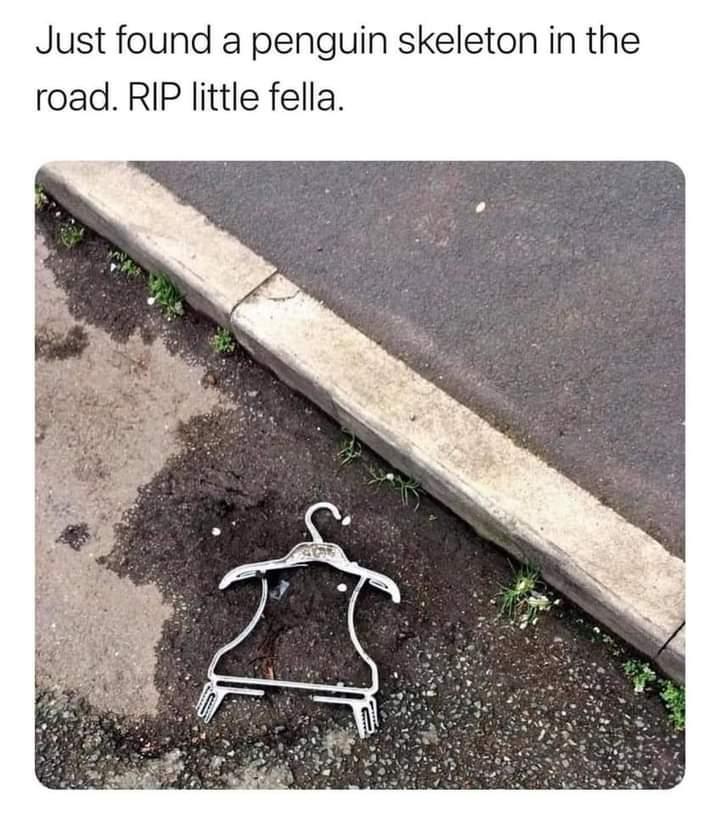 Memes fallen penguin