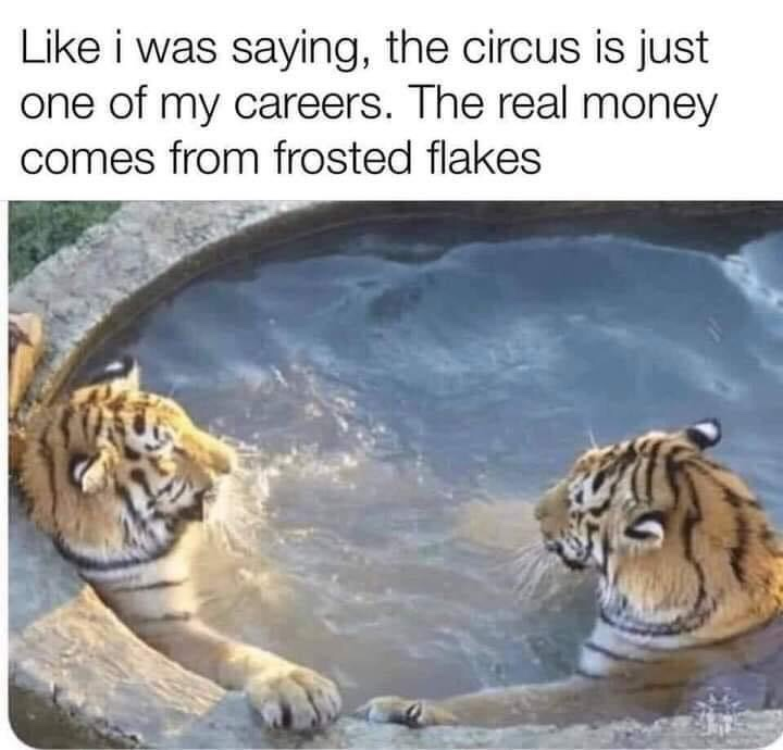 Memes frosted flakes
