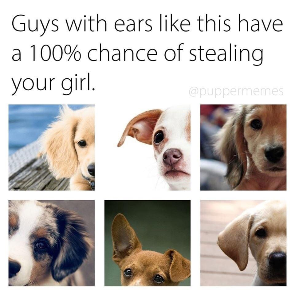 Memes The most adorable dogs