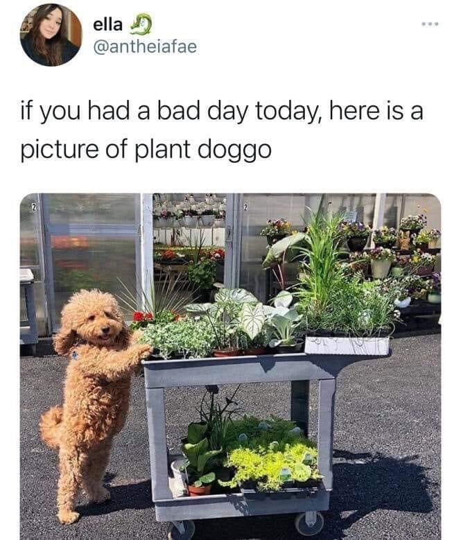 Memes cute Doggo