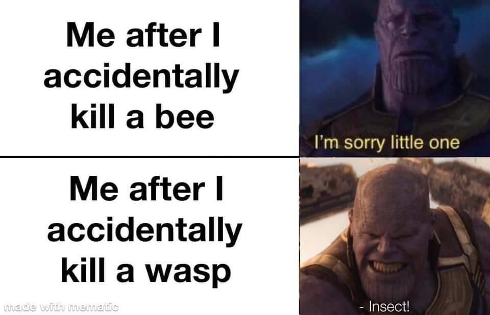 Memes bees versus wasps