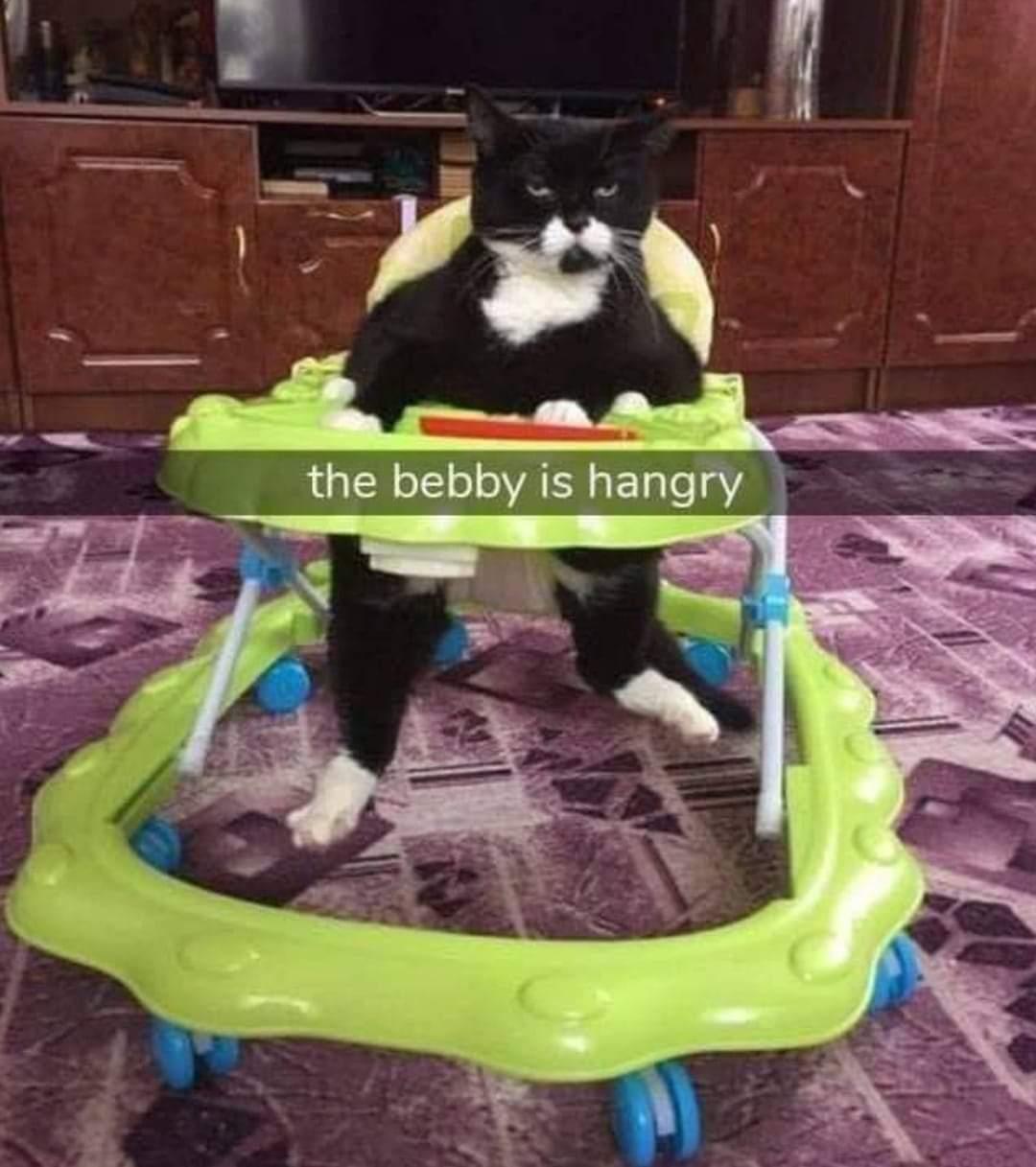 Memes funny cats