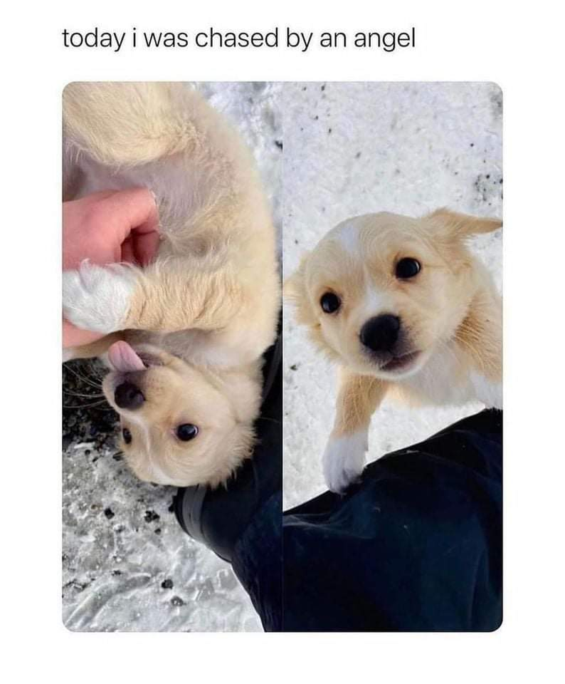 Memes being chased by a puppy