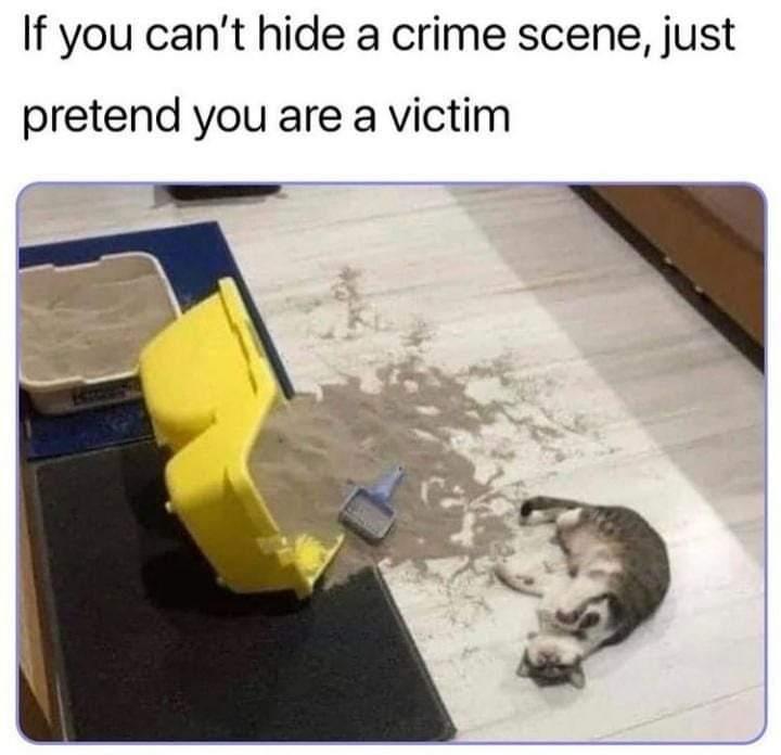 Memes cat making mess of the litter box